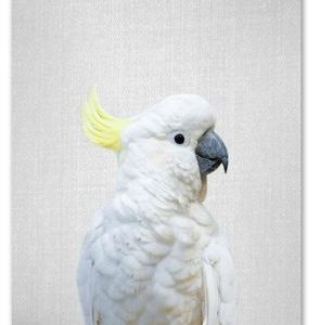 Cute Cockatoo Print 21x30cm A4