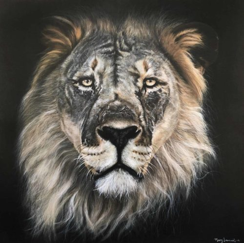 Mary Zammit Lion Print 1