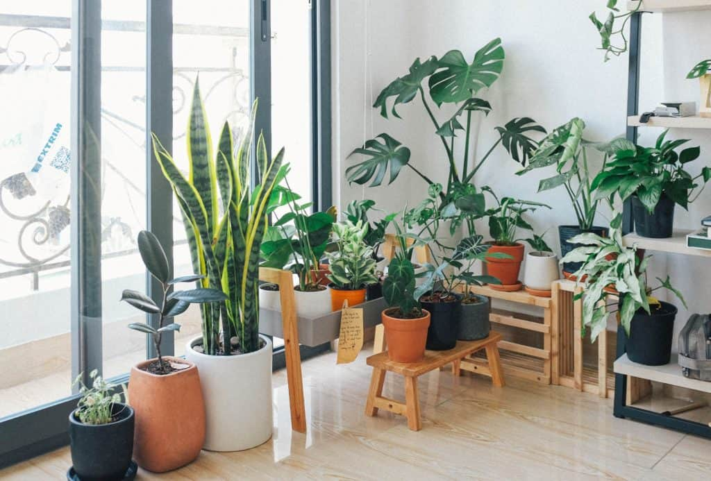 Living room filled with many different plants including snake pants