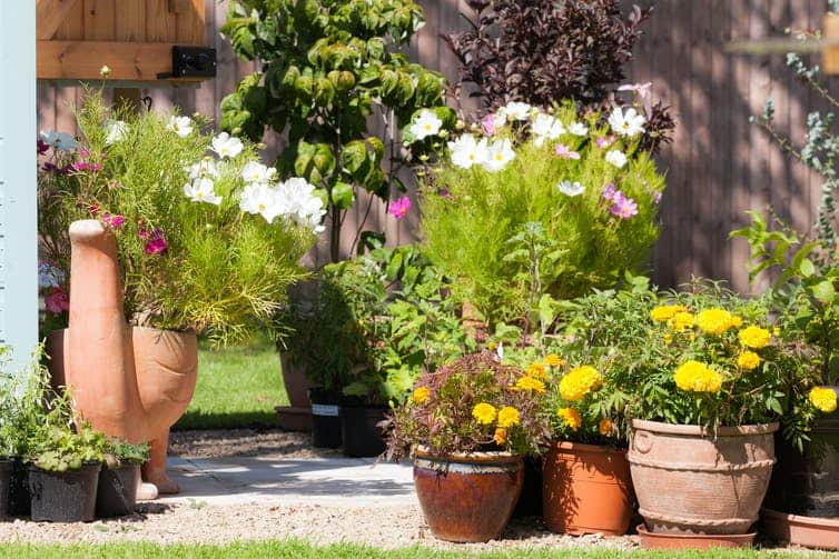 A pretty selection of potted plants in a garden